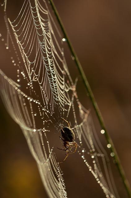 spider-211932_640