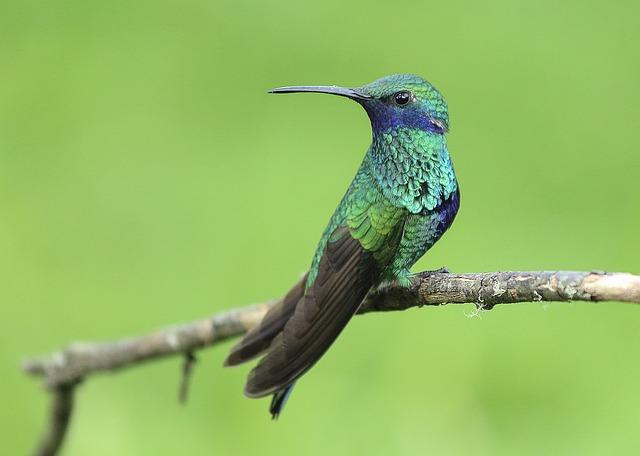 hummingbird-1068370_640