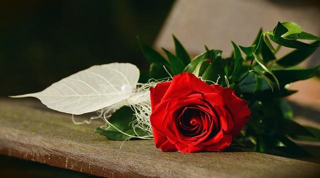 rose-1711224_640