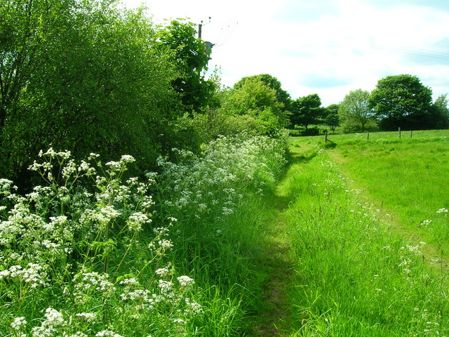 Verdant_Hedgerows_-_geograph.org.uk_-_178519